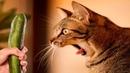 ПРИКОЛЫ С КОТАМИ - Смешные коты и кошки 2019