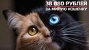 Пять одинаковых кошек на стриме казино в слоте Pretty Kitty