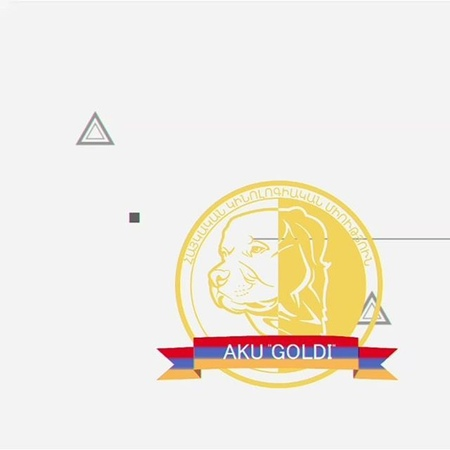 Armenian_kennel_union_goldi video