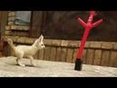 Baby Fox vs Mini Inflatable Flailing TubeMan 🤣