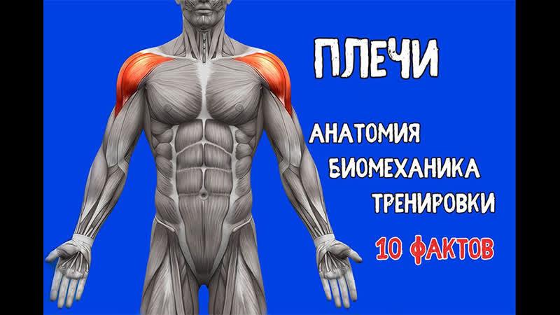 ПЛЕЧИ. 10 Фактов. Тренировки, Биомеханика, Анатомия