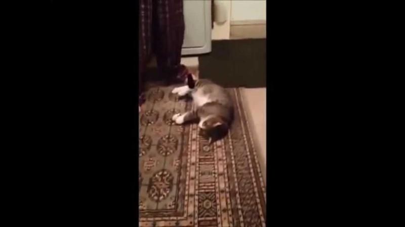 Кот притворщик не хочет гулять
