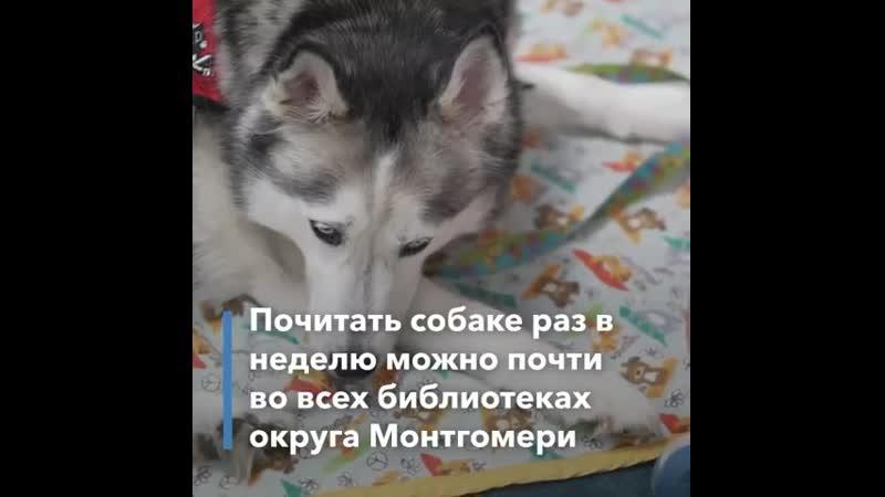 Как с помощью собаки заинтересовать ребенка чтением