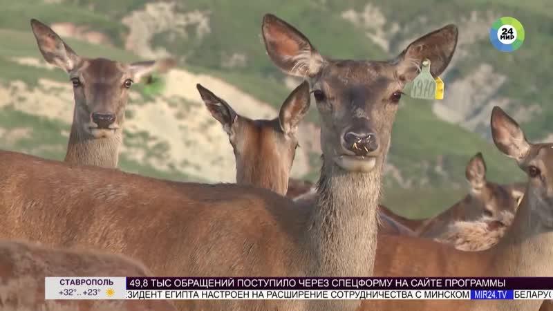 Первый в Азербайджане сафари-парк приглашает на экскурсии