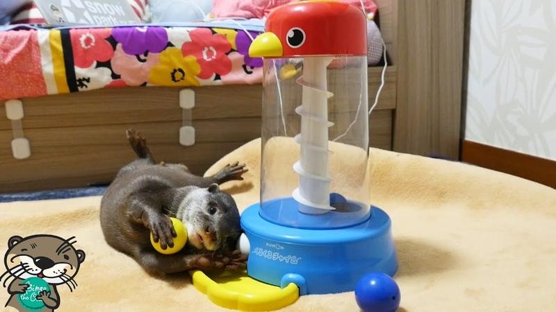 知育玩具をカワウソのビンゴに試してみたら・・(Otter Bingo first try on developmental toy)