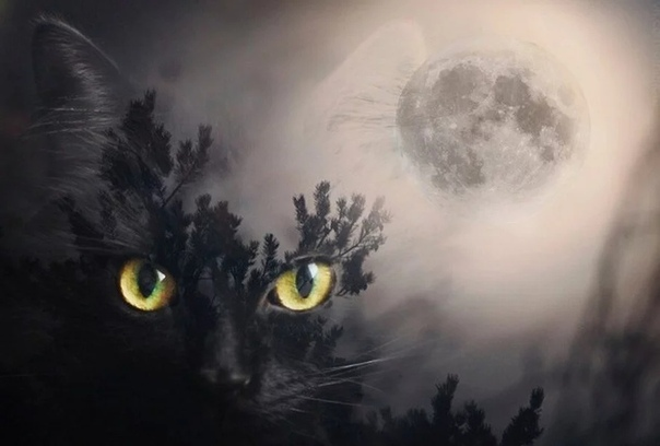 мифическая кошка и святые люди у моей свекрови есть кошка. муся. ну, по крайней мере, моя свекровь уверяет, что у неё есть кошка муся. муся всё время «где-то тут» или «да вот только что под