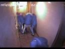 Agression dun couple dorigine asiatique à son domicile dans un quartier résidentiel du 13e