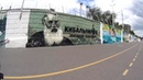 Саратов - Лето 2017 - 18.06.2017 - Парк - Йога - Набережная - Затон - Пляж - Триатлон - Граффити