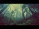 Deep Forest Healing music Calming Soothing Relaxing Sleeping music Nature Meditation Yoga