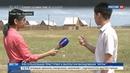 Новости на Россия 24 Саранча атаковала поля Бурятии
