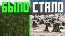 Русская тайга - фильм о масштабных вырубках лесов в Сибири