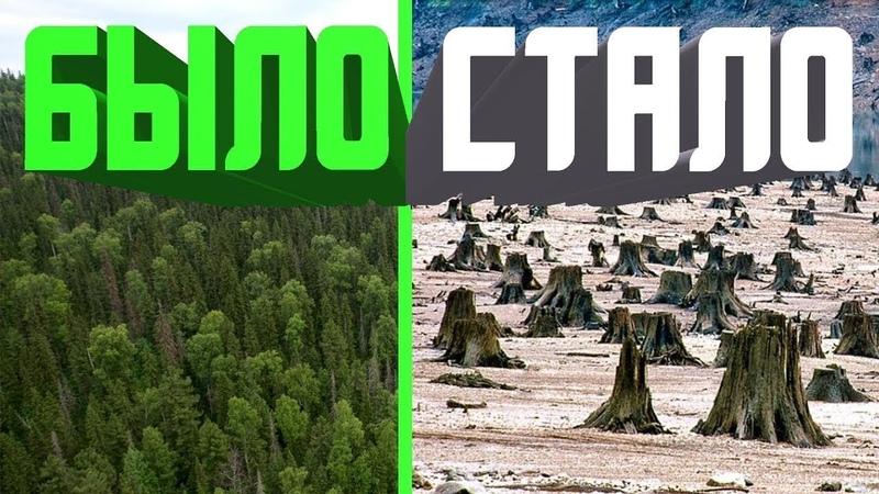 Русская тайга фильм о масштабных вырубках лесов в Сибири