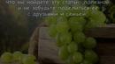 Косточки винограда польза и вред противопоказания Как легко заработать деньги в интернет