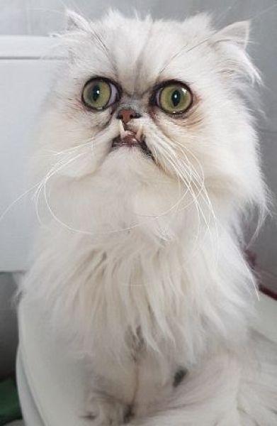 Этот кот вернулся с кладбища домашних животных