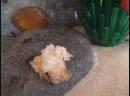 Муравьи и хлеб 2