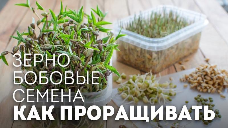 КАК ПРОРАЩИВАТЬ зерно, бобовые, семена🍴Жизнь - Вкусная!