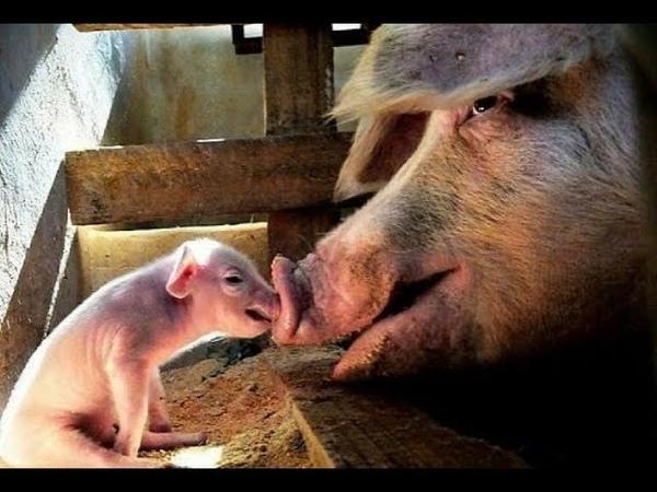 *WARNING!* - Most Graphic Animal Cruelty Video