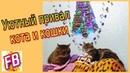 FB Кот и Кошка в злачных местах расслабляются Смешные коты