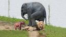 Mother Elephant rescue her baby from Lion - Leopard vs Hedgehog, Lion vs Zebra,Wildebeest...
