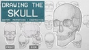 Drawing The SKULL - Anatomy, Proportions Construction - Anatomy 1