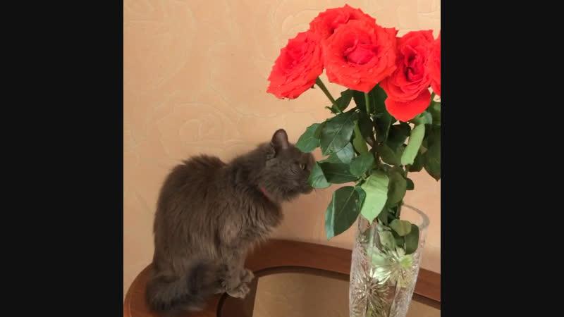 Маняша любит розы)🤪😂🤣👍