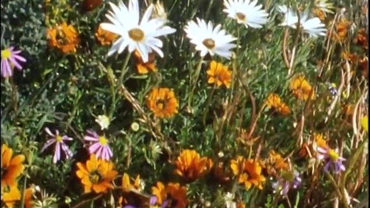 BBC Невидимая жизнь растений 3 Расцвет Документальный 1995