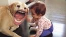 Собака уебака: Скажи ГАФ ЕЩЕ РАЗ!