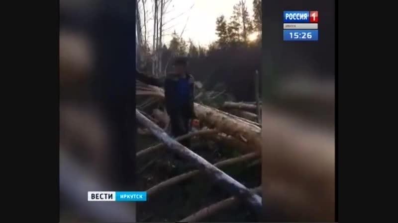 Очередную бригаду нелегальных лесорубов задержали в Аларском районе