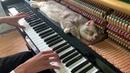 Doraemon Theme Song - Piano Meowssage