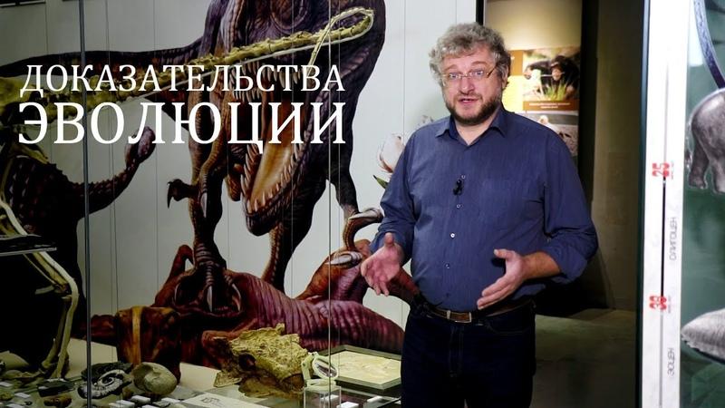 Доказательства эволюции: переходные звенья. Александр Рубцов