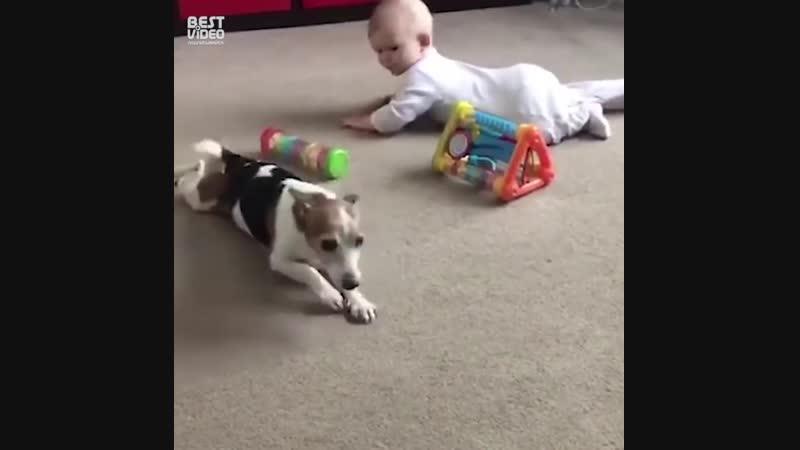 Песель учит малыша ползать