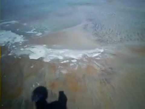 Мексиканский залив, якобы нефтеядные бактерии