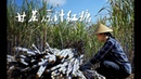 砍2000多斤甘蔗,熬了100多斤甘蔗原汁红糖,一家人忙了2天 滇西小哥