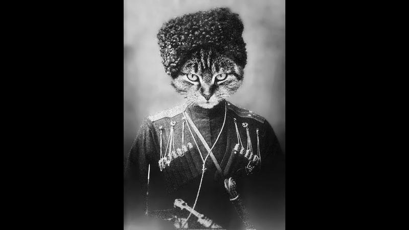 Кот из Петербурга виртуозно исполняет застольные грузинские песни