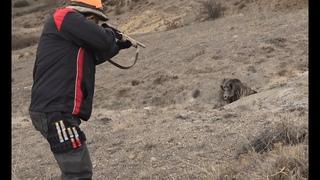 Harika bir Domuz Avı Ekip İşi - ÇORUM / Perfect Action Pig Hunting