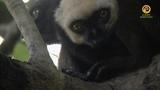 Захватывающий Мадагаскар. Леса северо востока - (3 серия из 10) - Full HD 1080i