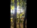 солнышко и дуб