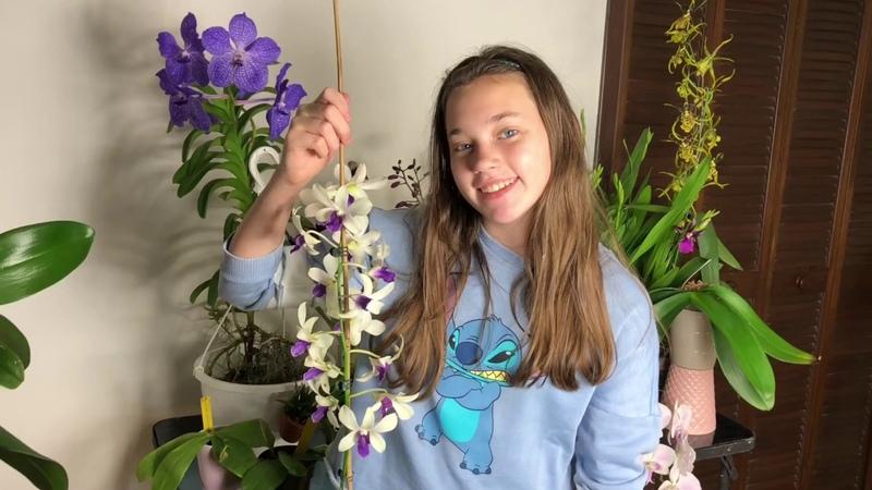 Мои короли и королевы. Цветение орхидей в сентябре. Денробиум, фаленопсис, ванда, башмачек и др.