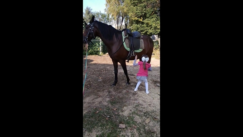 как слезть с коня