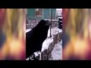 Вася кушать хочет, говорящий ворон