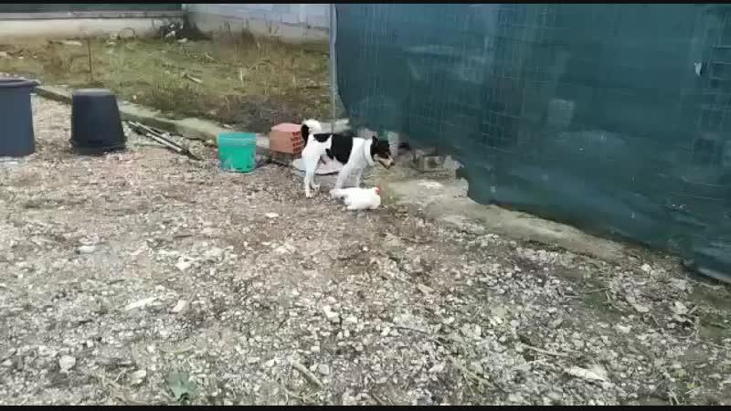 Курочка не плач 😀