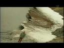 топ документальный - В чём загадка Земли Санникова? История острова призрака.