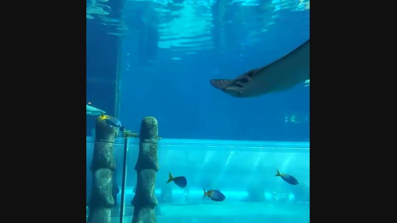 Аквариум в аквапарке в Дубаи