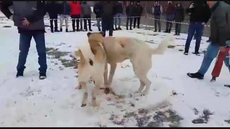 Sivastan Alabas vs Gumushaneden Balta 03 02 2019