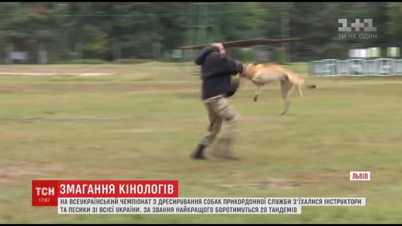 20 собак-прикордонників змагаються у вміннях на чемпіонаті з дресирування