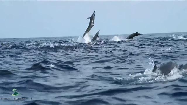 Sea acrobats