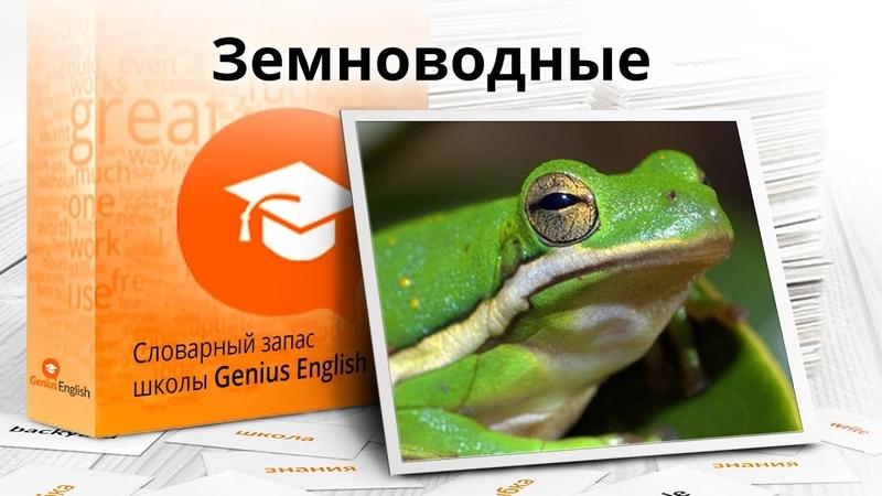 Тема Земноводные - Словарный запас школы GeniusEnglish