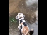 Кошечка гуляет под дождем