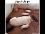 Pig circle pit