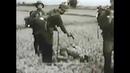 Tội ác trong Chiến tranh Việt Nam 1954 1975